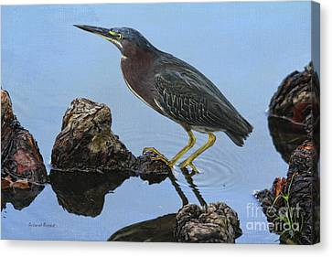 Green Heron Visiting The Pond Canvas Print by Deborah Benoit