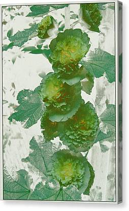 Canvas Print featuring the photograph Green Hollyhocks by Tom Wurl
