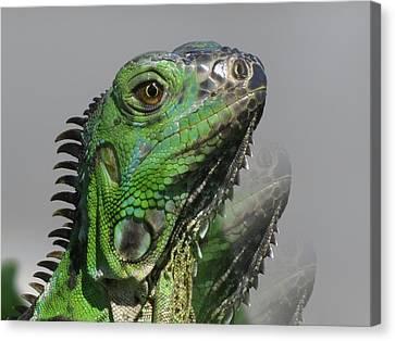 Green Iguana Triple Canvas Print by Vijay Sharon Govender