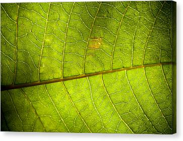 Green Leaf Background Canvas Print by Maratsavalai Lertsirivilai