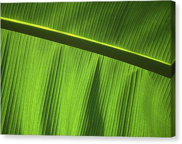 Green Leaf, Close-up Canvas Print by Axiom Photographic