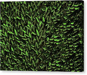 Green Leaf Canvas Print by David Dehner