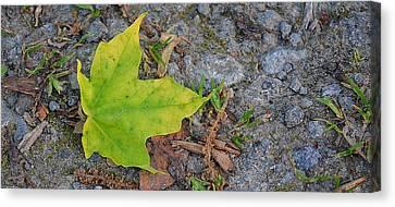 Green Leaf On Ground Canvas Print