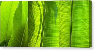 Green Leaf Canvas Print by Setsiri Silapasuwanchai