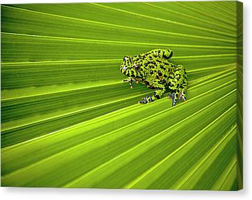 Green Lines Of Nature Canvas Print by Jeff R Clow