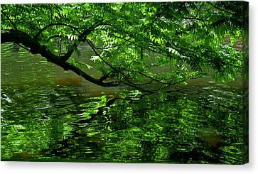 Alberi Canvas Print - Green  by Michele Mule'