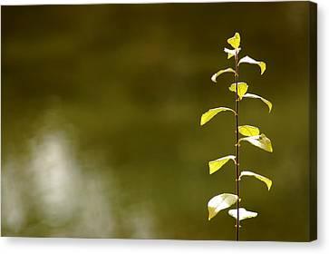 Green Morning Canvas Print