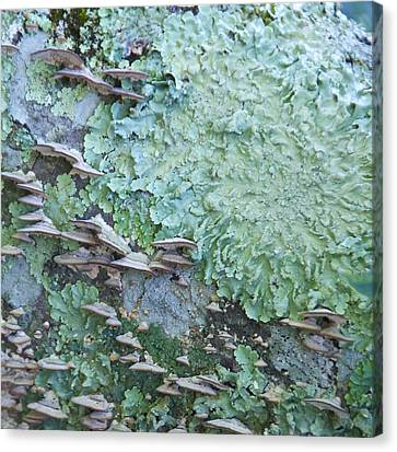 Green Mossy Fungus Party Canvas Print by Cindy Lee Longhini