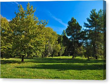 Green Oasis Canvas Print by Stavros Argyropoulos