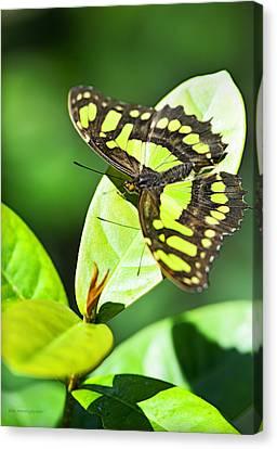 Green On Green Canvas Print