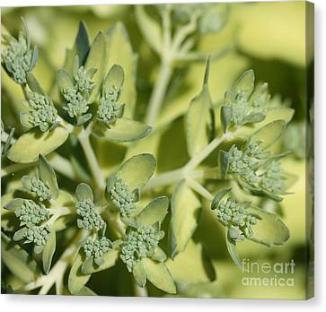 Green On Green Canvas Print by James E Weaver