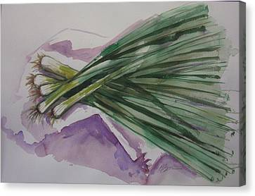 Green Onions Canvas Print by Barbara Spies