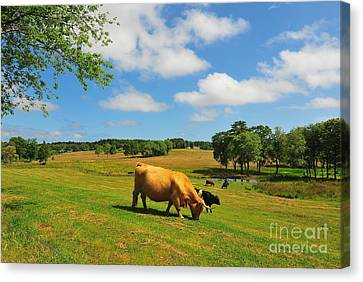 Green Pasture Canvas Print