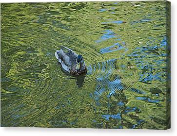 Canvas Print featuring the photograph Green Pool by Joseph Yarbrough