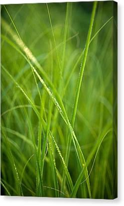 Green Prairie Grass Canvas Print by Steve Gadomski