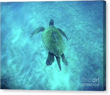 Green Sea Turtle 2 Canvas Print by Bob Christopher