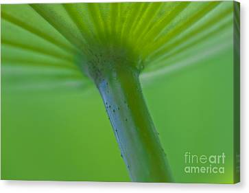 Green Shape Canvas Print by Heiko Koehrer-Wagner