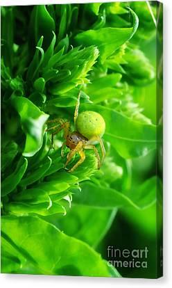 Green Spider 2.0 Canvas Print by Yhun Suarez