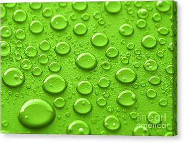 Green Water Drops Canvas Print by Blink Images