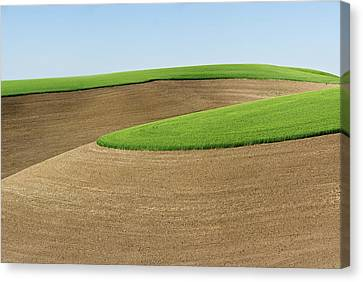 Plowed Fields Canvas Print - Green Wheat Atop Contoured Fields by Donald E. Hall