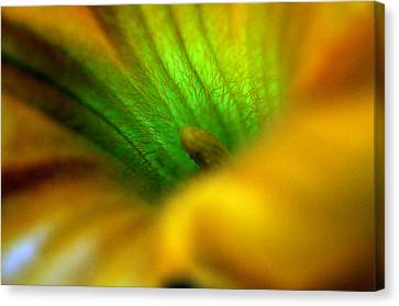 Greener On The Other Side Canvas Print by Wanda Brandon