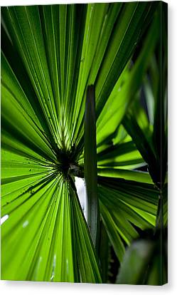 Canvas Print featuring the photograph Greenery by Carole Hinding