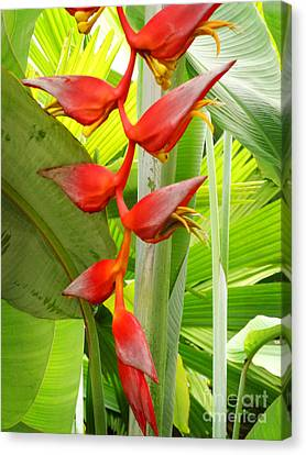 Greenhouse Heliconia Canvas Print by Stephen Mack