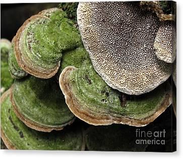 Greening Velvet Brackets Canvas Print