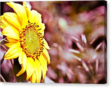 Canvas Print featuring the photograph Greeting The Sun. by Cheryl Baxter