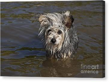 Canvas Print featuring the photograph Gremlin by Jeannette Hunt