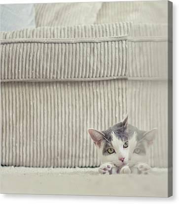 Grey And White Cat Peeking Around Corner Canvas Print