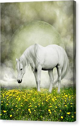 Canvas Print featuring the photograph Grey Pony In Field Of Buttercups by Ethiriel  Photography