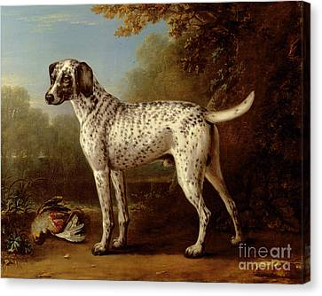 Grey Spotted Hound Canvas Print by John Wootton