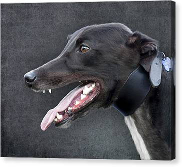 Canvas Print featuring the photograph Greyhound Dog Portrait by Ethiriel  Photography