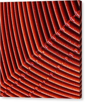 Grill Drops Canvas Print by Rebecca Cozart