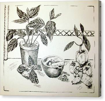 Pestal Canvas Print - Grinding Herbs by Shelley Bain