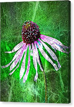 Gritty Coneflower Canvas Print by Marty Koch