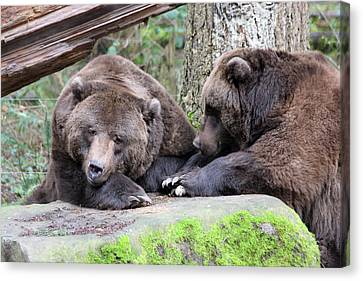 Canvas Print featuring the photograph Grizzley - 0001 by S and S Photo