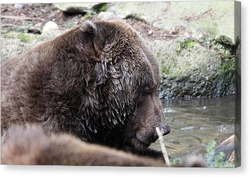 Canvas Print featuring the photograph Grizzley - 0003 by S and S Photo