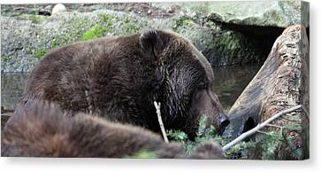 Canvas Print featuring the photograph Grizzley - 0004 by S and S Photo