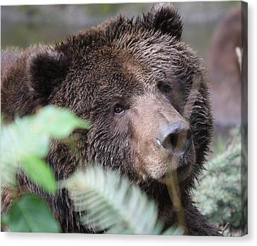 Canvas Print featuring the photograph Grizzley - 0005 by S and S Photo