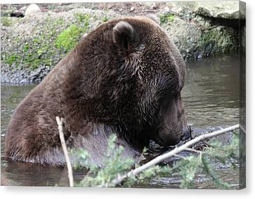 Canvas Print featuring the photograph Grizzley - 0006 by S and S Photo