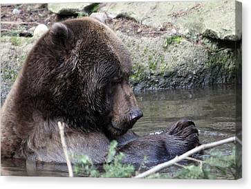 Canvas Print featuring the photograph Grizzley - 0007 by S and S Photo
