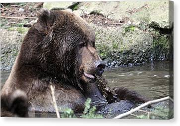 Canvas Print featuring the photograph Grizzley - 0008 by S and S Photo