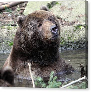 Canvas Print featuring the photograph Grizzley - 0009 by S and S Photo