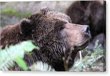 Canvas Print featuring the photograph Grizzley - 0010 by S and S Photo