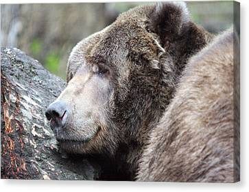 Canvas Print featuring the photograph Grizzley - 0014 by S and S Photo