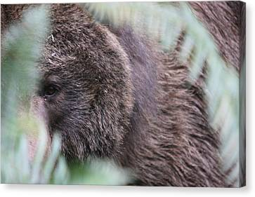 Canvas Print featuring the photograph Grizzley - 0016 by S and S Photo