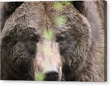 Canvas Print featuring the photograph Grizzley - 0017 by S and S Photo