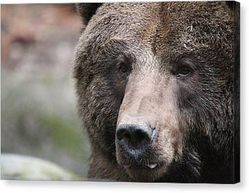 Canvas Print featuring the photograph Grizzley - 0019 by S and S Photo